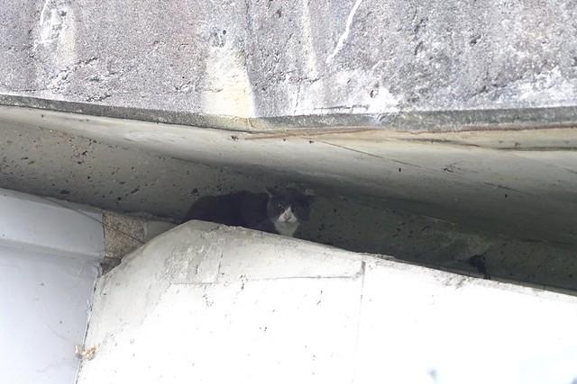 Today's Cat@2019-05-21