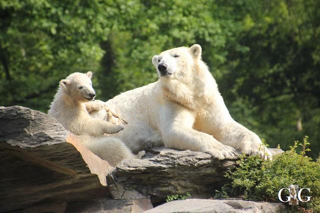 Besuch Tierpark Friedrichsfelde 19.05.201948