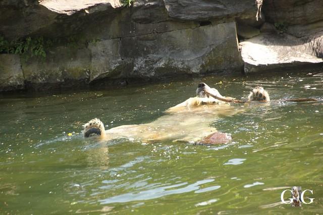 Besuch Tierpark Friedrichsfelde 19.05.201935
