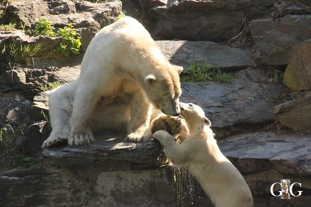 Besuch Tierpark Friedrichsfelde 19.05.20197