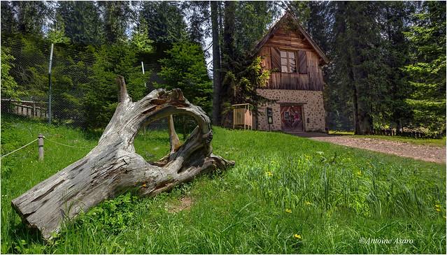 L'arbre mort et le chalet de la forêt. Park Alpha.