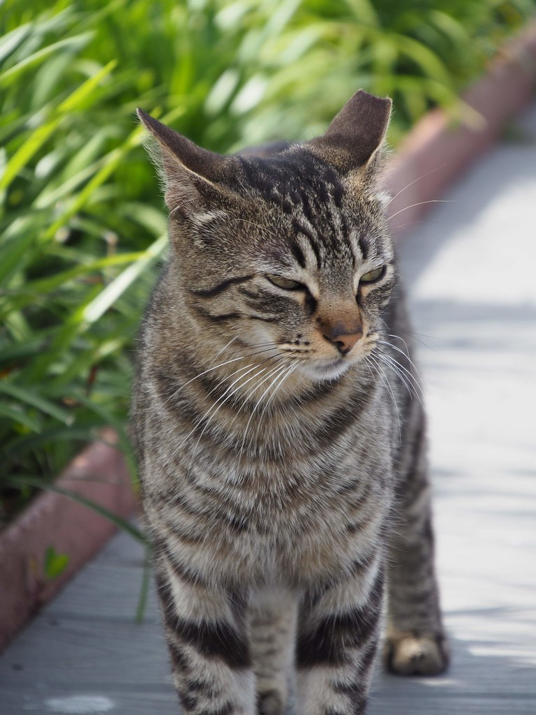 Kitty with squinting eyes
