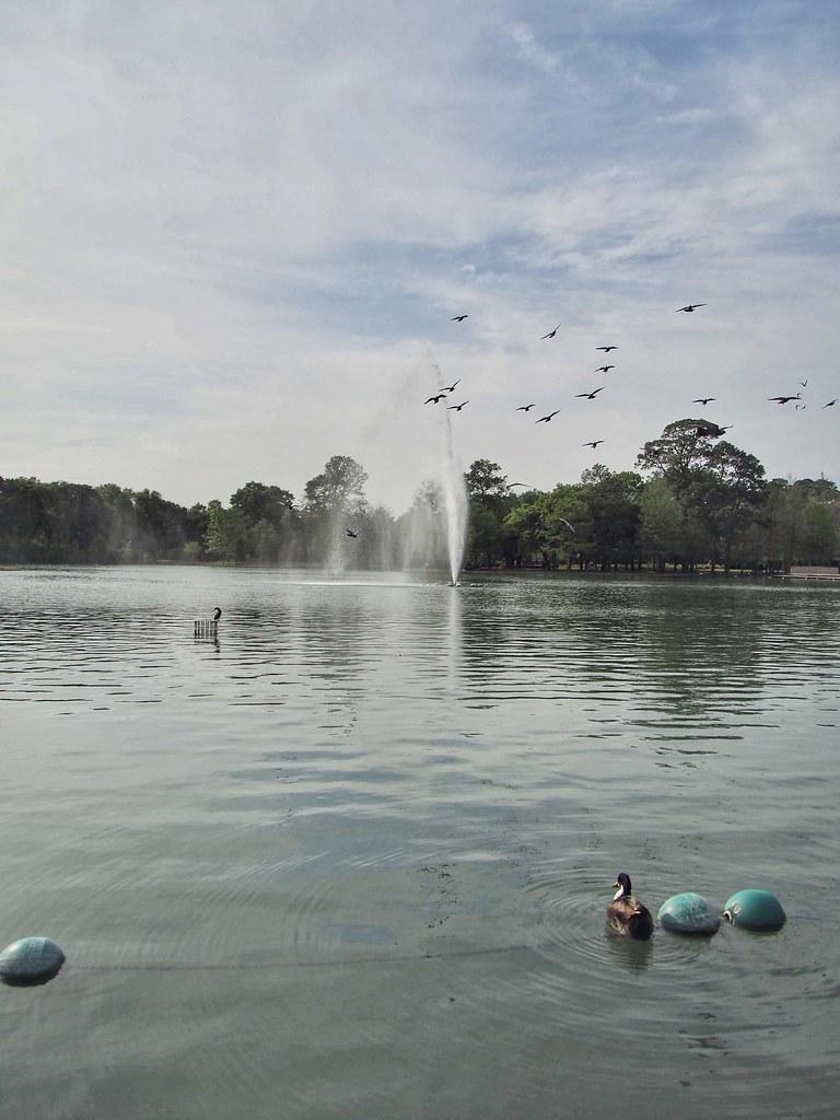 Hermann Park Lake in Houston, Texas with birds flying