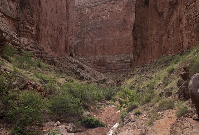 Buckfarm canyon