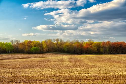minnesota clouds farm farmland sky spring sunset trees lindstrom unitedstatesofamerica