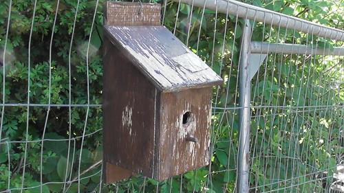 bird box with bees May 19