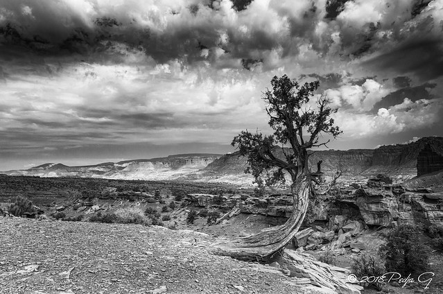 Capitol Reef - BW