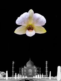 The Taj #tajmahal #india #indian #newdelhi #mumbai #agra #hindu #hinduism #hindi #ottawa #montreal #toronto #brampton #iran #tokyo #persia #tehran #nyc #losangeles #paris #vancouver #berlin #london #manchester #birmingham