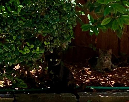 Mystery kitty in the garden!
