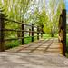 Bridge at Nature Park