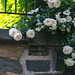 P Street Flowers