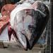 Dead Fish - Tuna