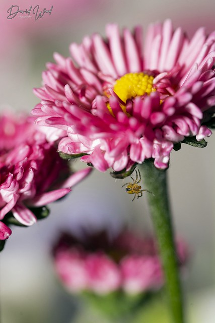 Tiny spider on a flower