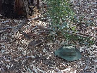 Hat Blending In