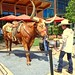 Longhorn and cowgirl wrangler, The Shops at Clearfork, Fort  Worth, May 12, 2019