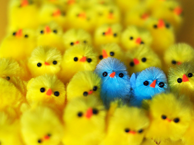 Two cheeky blue chicks standing out from the crowd