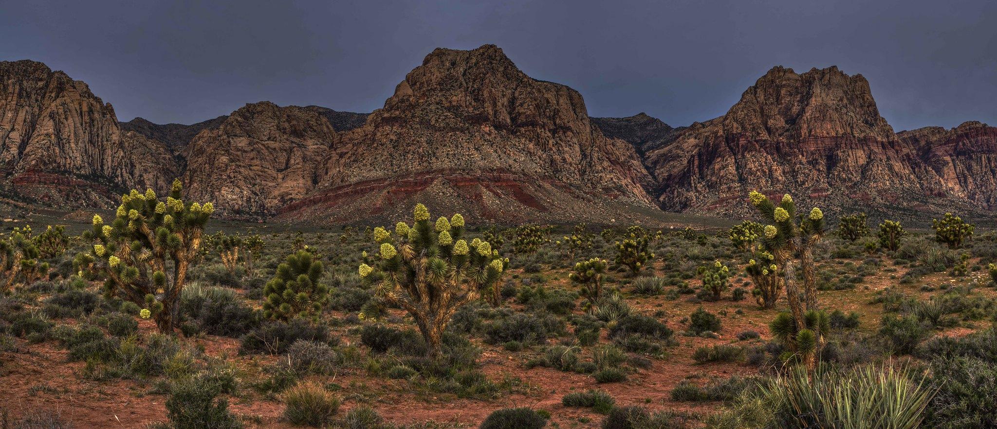 MM VII MST Dark Desert Nights