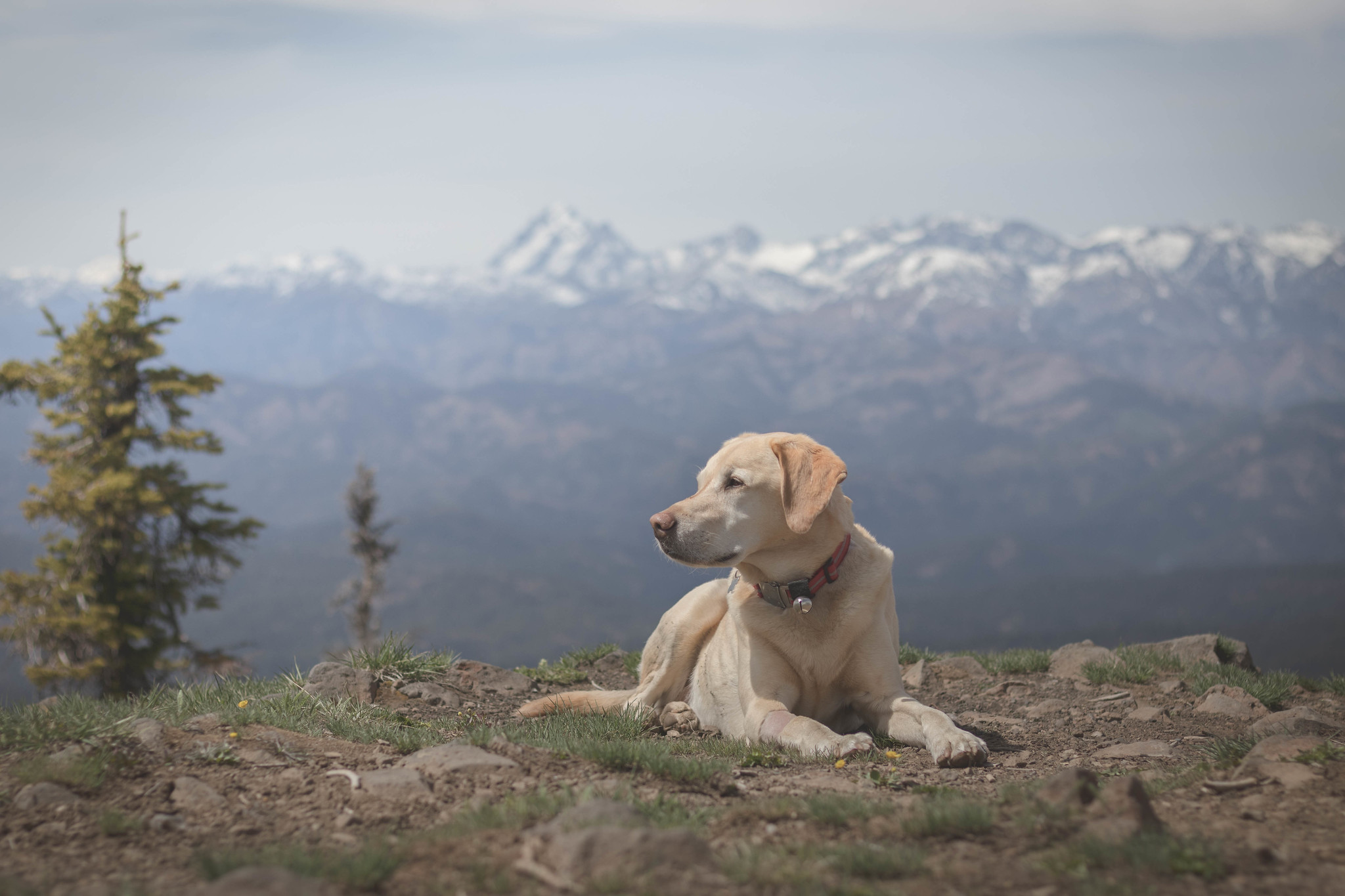 Summit dogs on Lion Rock