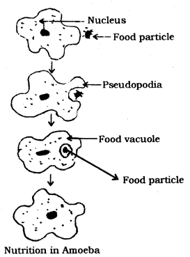 Life Processes Class 10 Notes Science Chapter 6 6