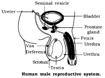 How do Organisms Reproduce Class 10 Notes Science Chapter 8 13