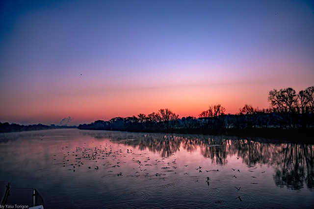 Colorful Mornings: Fog and many birds at sunrise along the Seine River viewed from a riverboat near Rouen (between Rouen and Les Andelys), Normandy Region, France-10a