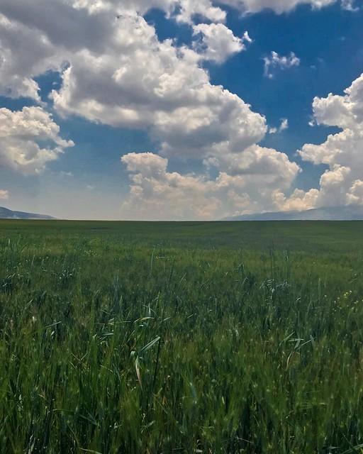 #springtime #landscape_captures #landscape_photography #landscape #photographyoftheday #photography #nature_photography #spring #flickr #explore #pic #capture #naturelovers #nature #photo #photographyoftheday