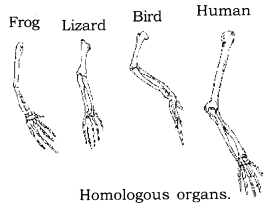 Heredity and Evolution Class 10 Notes Science Chapter 9 5