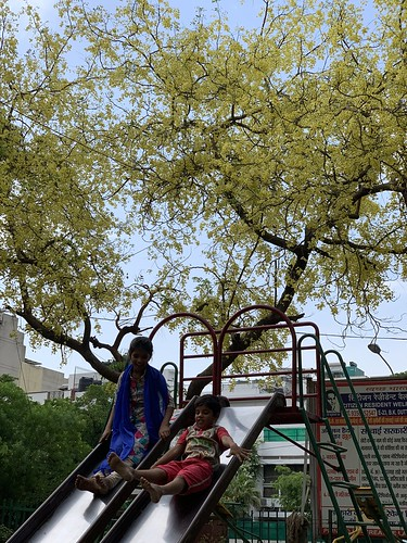 City Season - Amaltas Poems, by Delhiwallas