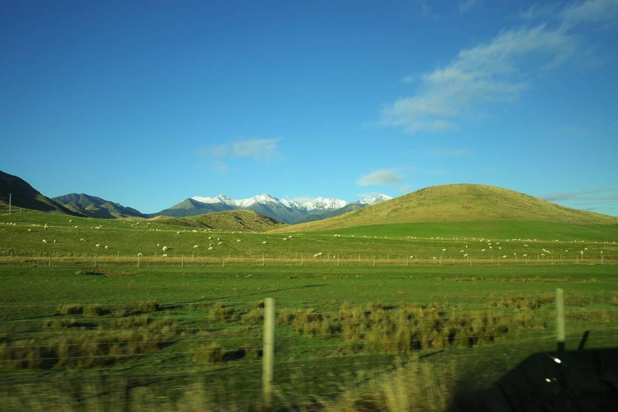 バスの車窓から羊牧場の草原風景