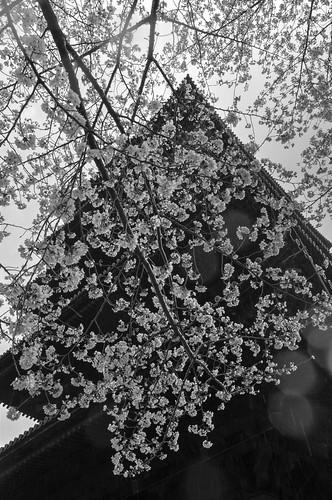 03-04-2019 ACROS - Kyoto (3)
