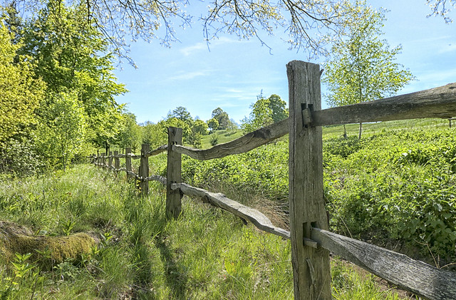 Quirky Old Fence