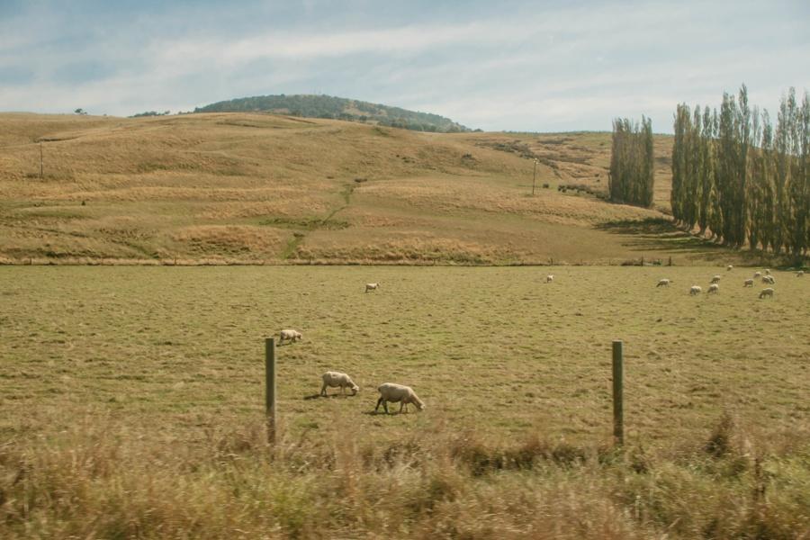Новая Зеландия: Оамару -