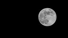 Lúa de maio