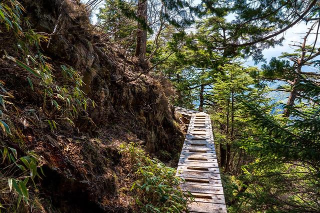 木橋が沢山あります
