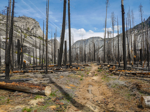 Burned areas in Little Yosemite Valley are somewhat apocalyptic but let you see the canyon | by snackronym