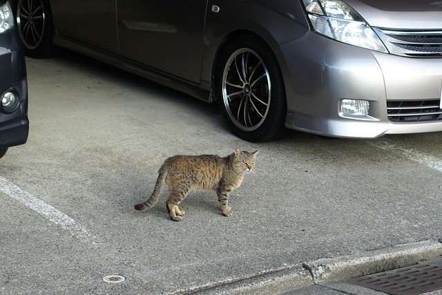 Today's Cat@2019-05-19