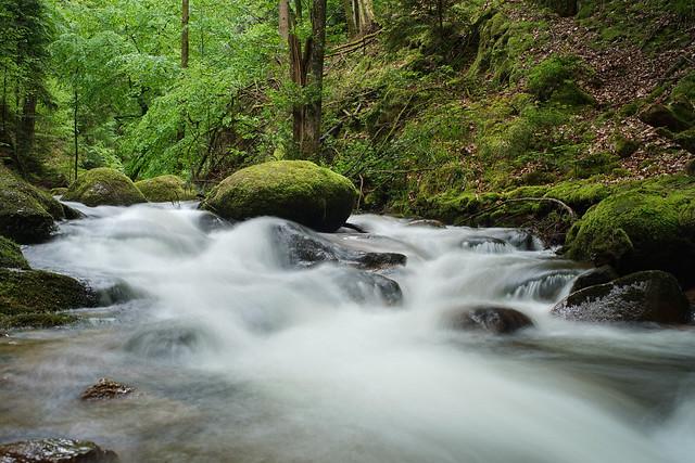 ruisseau dans la foret