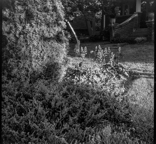 frontyard latelight nearsunset craggyavenue asheville northcarolina bencinikoroll bencini kodaktrix400 hc110developer 120 120film film mediumformat monochrome monochromatic blackandwhite