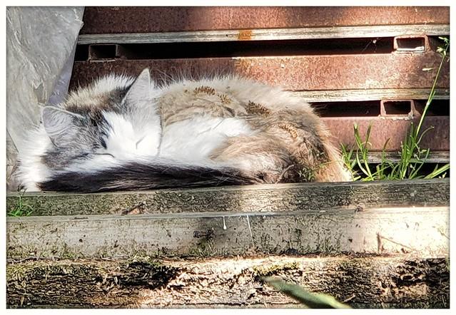 Sleeping in the garden   #cat #katzen #frühling #samsung #s9plus #smartphonepics