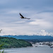 American Bald Eagle over Commencment Bay, Tacoma, Washington with Mount Rainier in the distance.