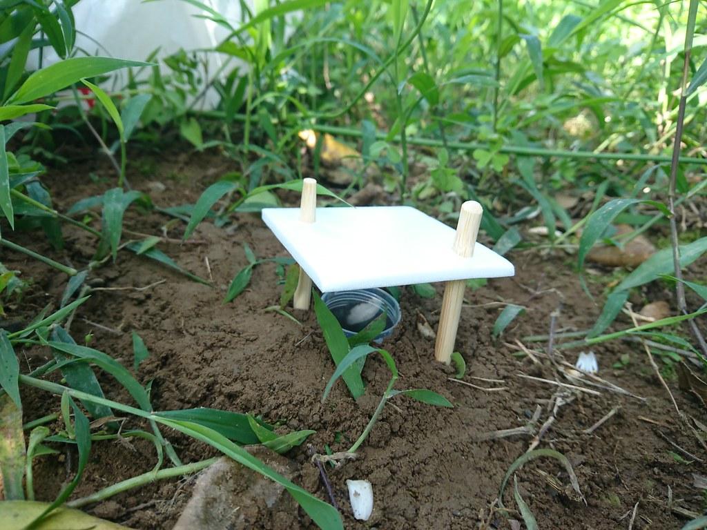 果園土壤生物陷阱採集法