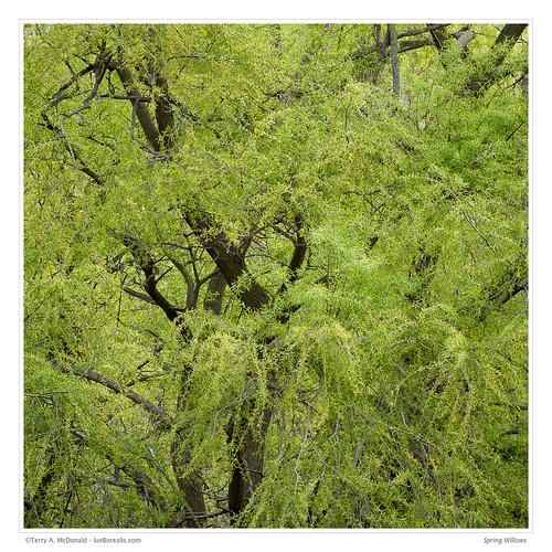 burlington canada forest green haltonregion hendrievalley landscape mixedforest ontario rbg royalbotanicalgardens spring willows