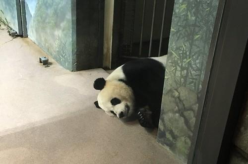 Mommy Mei Xiang