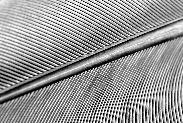 feather_detail