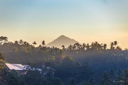 palmtrees sunrise volcano bali indonesia penestanan