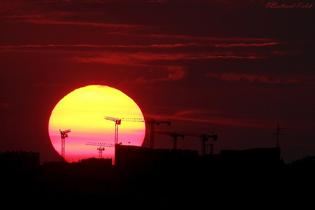 Grues solaires