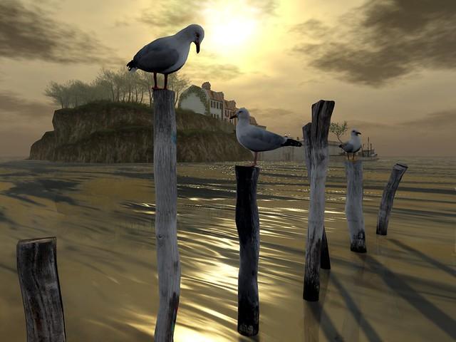 Missing Melody -  A Turn of Sea Gulls