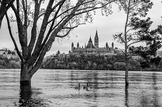 A couple of avian tourists (Canadian geese) view Parliament Hill from the flooded Ottawa River | by Phil Marion (173 million views - THANKS)
