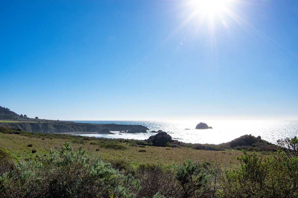 Muir Woods National Monument Road Trip