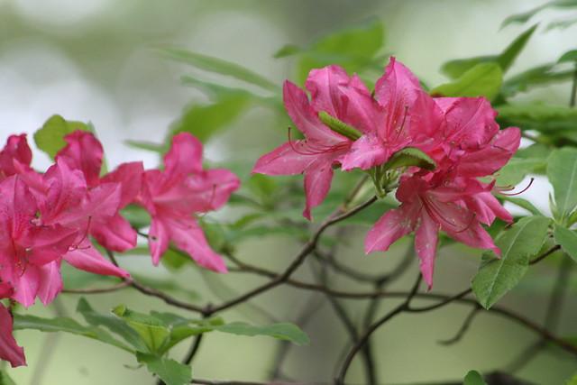 Flowers/Des fleurs/Flores (unknown sp.)